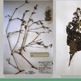 El herbario del Museo y Jardín Botánico