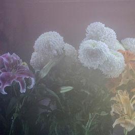 En el fin solo hay flores