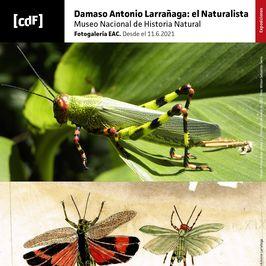 Damaso Antonio Larrañaga: el Naturalista
